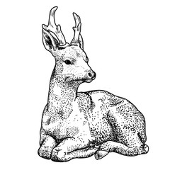 Lying cartoon deer