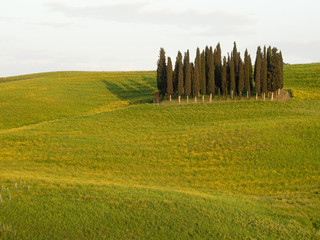 Italy, Tuscany - typical countryside