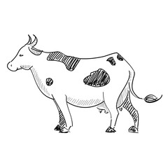 vector illustration cow
