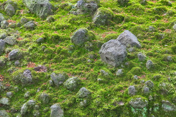 Natural wet green moss on stone wall