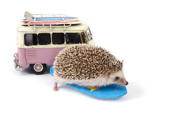 Hedgehog on surfboard and toy car.