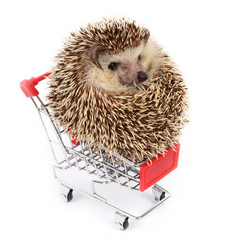 Little hedgehog and shopping cart.