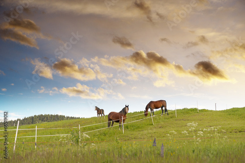 canvas print picture Grazing horses