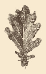 oak leaf engraving style, vintage illustration, hand drawn