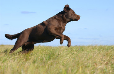 brown dog in the sky background