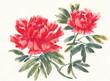 Постер, плакат: Акварельные цветы пионы вариант 3