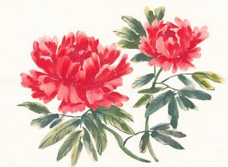 Акварельные цветы, пионы, вариант 3.