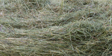 punch of fresh mowed dry hay grass
