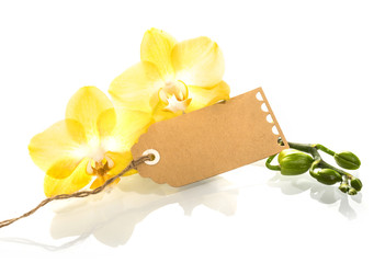 Beautiful phalaenopsis orchids with a gift tag