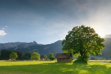back light of sun with linden tree and hut at tyrolean alps