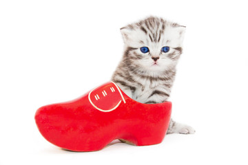 Young cat in red wooden shoe