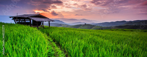 Paddy view in the sunset, Chiangmai province of Thailand - 66525279