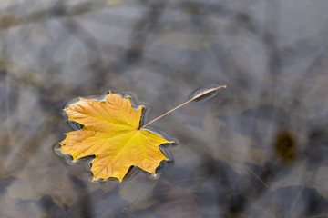 Herbstblatt, autumn leaf