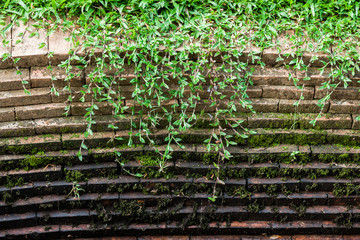 Grass and moss grow on old brick wall
