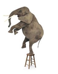 elephant acrobat