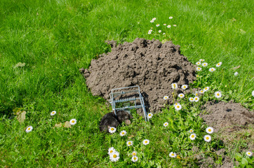 dead mole in traps meadow to the powdery sunk cave