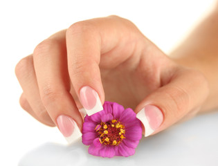 Pink flower with woman's hand on white background