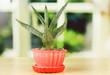 Aloe in flowerpot, on wooden windowsill