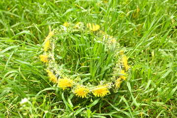 Wreath of dandelions on grass, outdoor