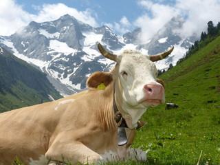 Milchkuh vor fantastischer Bergkulisse