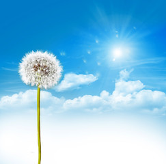dandelion seeds on a blue sky