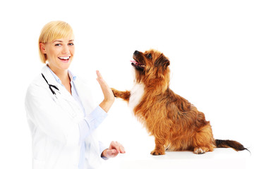 Dog giving high five to a vet