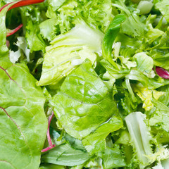 green leaves in fresh italian lettuce mix