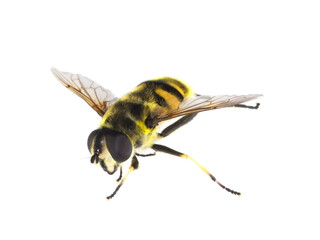insecte en vol