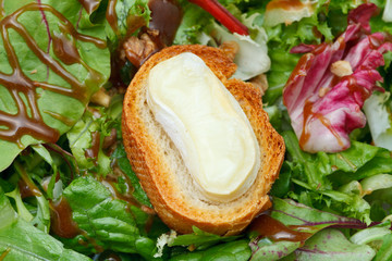 crouton with soft cheese on green lettuche