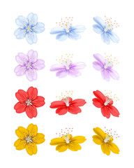 Flowers in different positions isolated on white