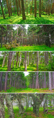 Set of deep forest landscapes
