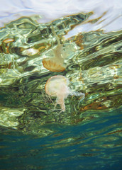 Underwater jellyfish reflected on the surface