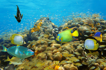Underwater life in a coral reef with many fish