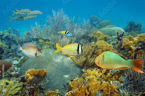 Tuinposter Koraalriffen Underwater coral reef with colorful tropical fish