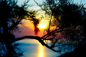 sunset over the sea and pine