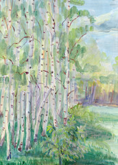 Birches in May