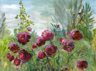 Flowering of red peonies