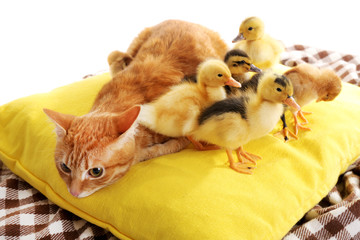 Red cat with cute ducklings on yellow pillow close up