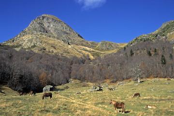 Cheval Comtois , Parc national des Pyrénées , 64