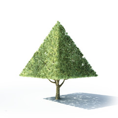 Pyramid shaped tree