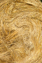 Close-up of a hay bale in a field