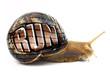 """Leinwanddruck Bild - Snail with """"Run"""" text written on its shell isolated"""