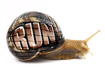 "Snail with ""Run"" text written on its shell isolated"