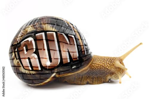 """Leinwanddruck Bild Snail with """"Run"""" text written on its shell isolated"""