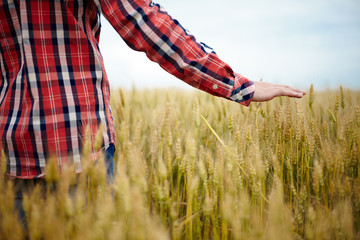 Young farmer's hand over wheat field
