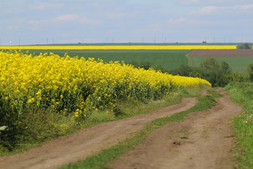 Dirt road among the fields