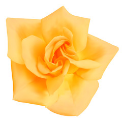 Rose flower. Photo-realistic vector illustration