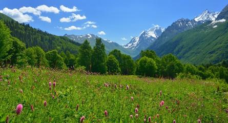 Meadow in Caucasus