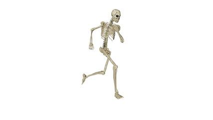 Skeleton running morphing into Human, white