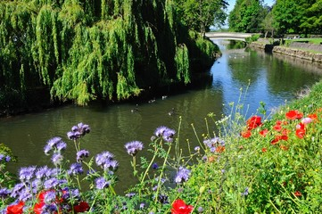 Wildflowers on riverbank, Tamworth © Arena Photo UK